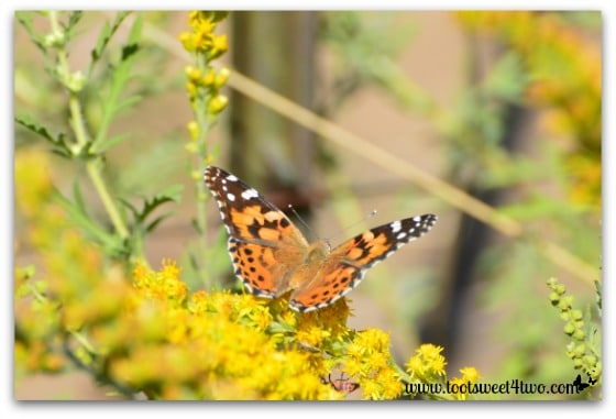 Butterfly - horizontal