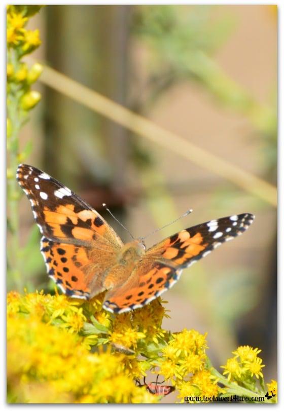 Butterfly - vertical