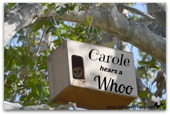 Carole Hears a Whoo cover