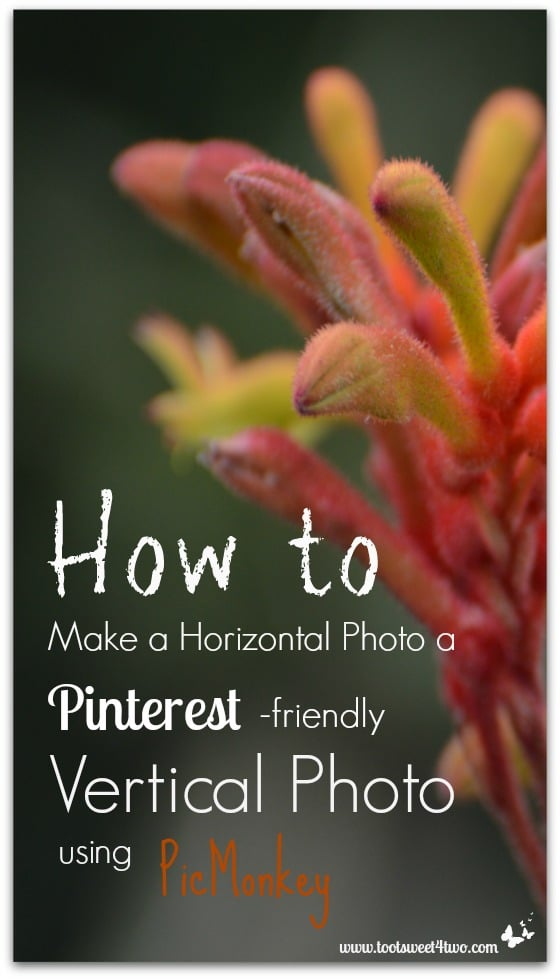 How to Make a Horizontal Photo a Pinterest-friendly Vertical Photo using PicMonkey cover