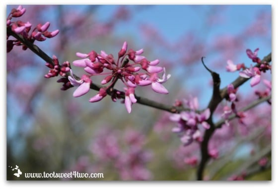 Pink flowering tree - The Best of the Rest of Your Life