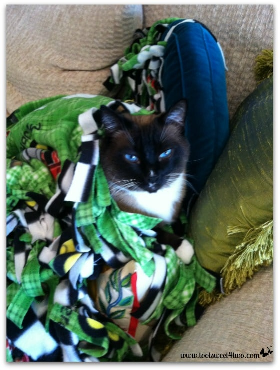 Coco in a green blanket and green pillow - 42 Shades of Green
