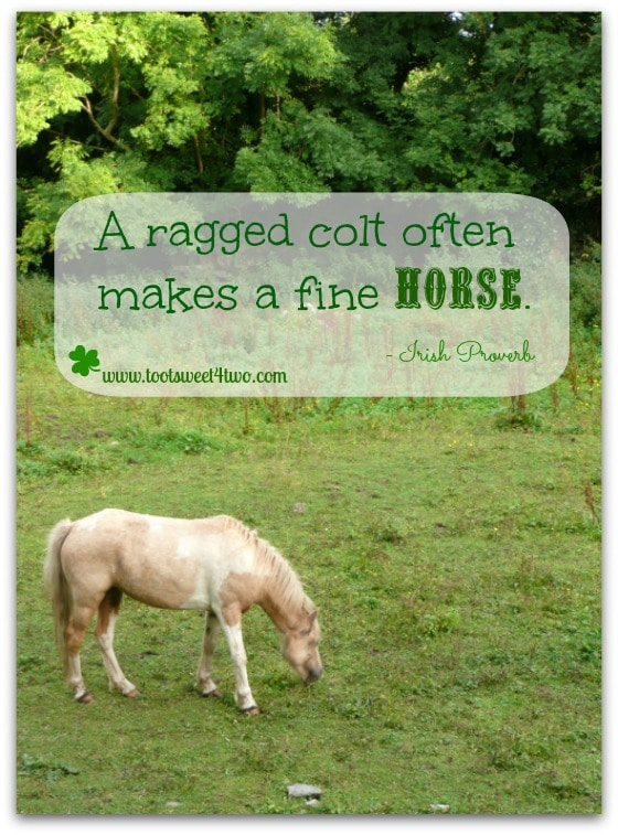 Ragged Colt Irish proverb