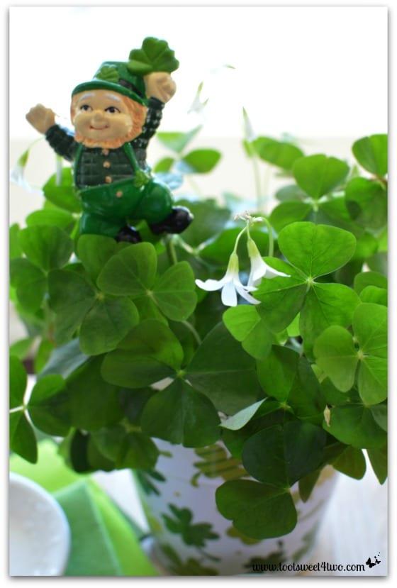 Shamrocks and Leprechaun in St. Patrick's Day pot