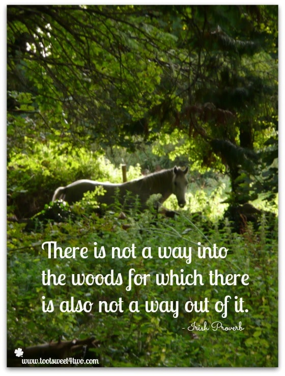 Way Out of the Woods Irish proverb