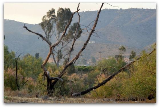 Tim Burton skeleton tree pic 1 - Alert are you Ready