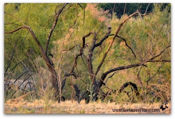 Tim Burton skeleton tree pic 2 - Alert are you Ready
