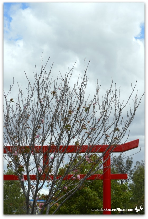 Japanese Torii Gate at Temecula Pond - The Fairest Blossom