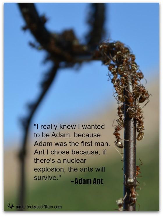 Adam Ant quote - Ant Bait cover