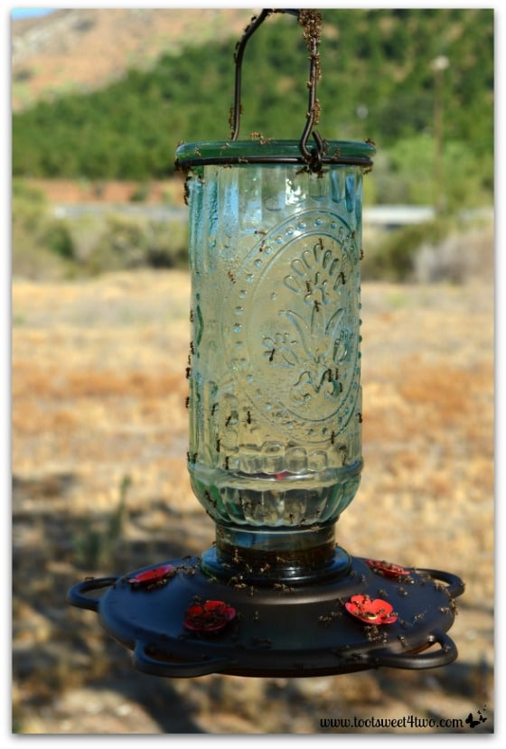 Ants crawling all over the hummingbird feeder - Ant Bait