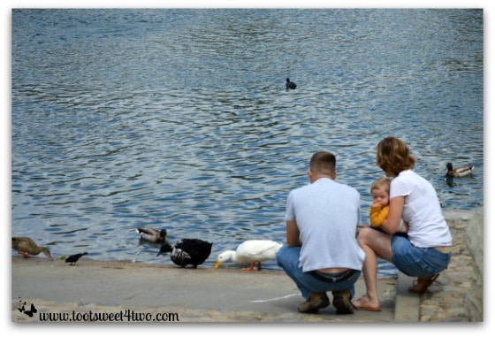 Family watching the ducks - Things I've Learned in 2 Years of Blogging