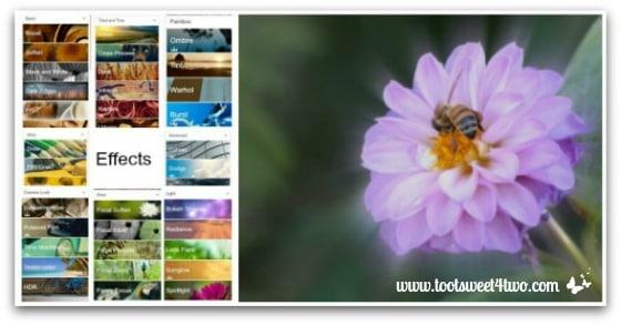 PicMonkey Basics - Edit a Photo - Pic 3 - Effects Focal Zoom