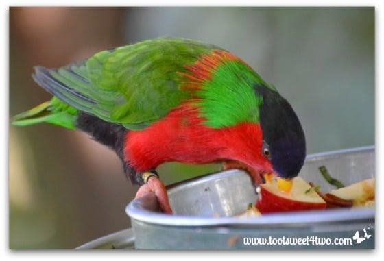 Rainbow Lorikeet eating an apple - Things I've Learned in 2 Years of Blogging