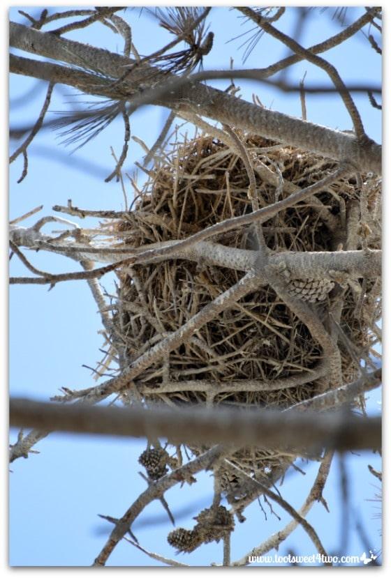 Great Blue Heron nest - Oceanside Harbor