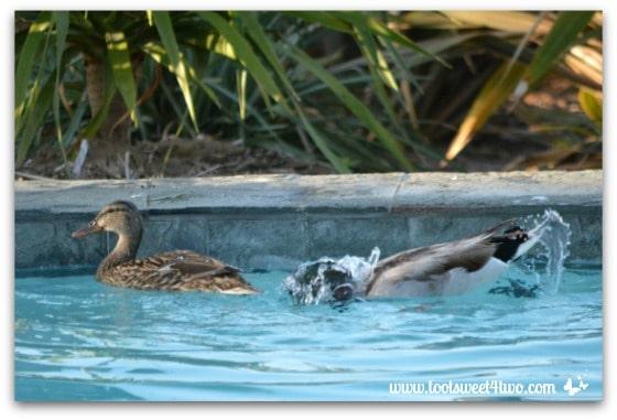 Pic 7 - Mallard bath - Paradise Found