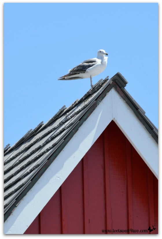 Seagull on a red building - Oceanside Harbor