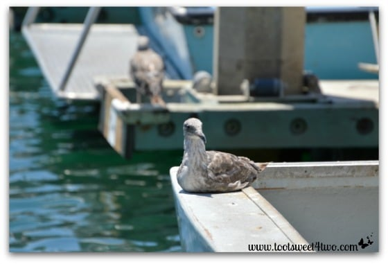 Seagulls on boats at Oceanside Harbor