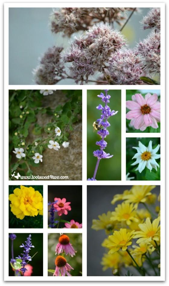 Flowers Chautauqua Institution