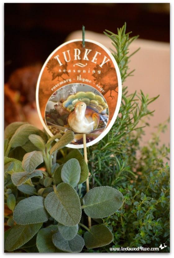 Rosemary, Thyme, Sage plant - Turkey Seasoning