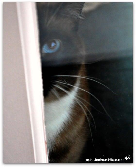 Twas the Night Before Christmas - Coco in doorway