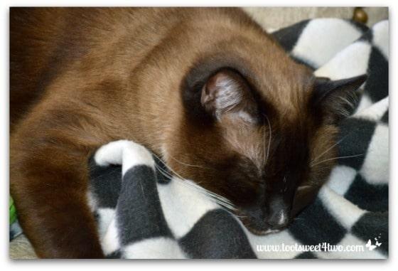 Twas the Night Before Christmas - Coco sleeping