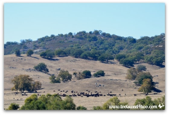 Cattle ranch across from Mission Santa Ysabel