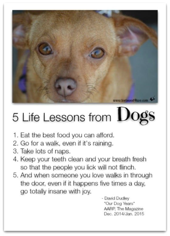 5 Life Lessons from Dogs - 14 Awesome Things