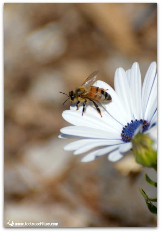 Freeway Daisy and Bee