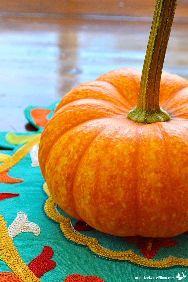 Mini pumpkin close-up