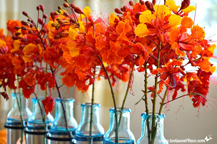 Red Mexican Bird of Paradise flowers in blue vases