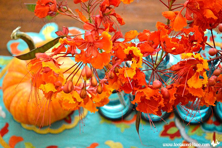 Red Mexican Bird of Paradise flowers on turquoise background close-up