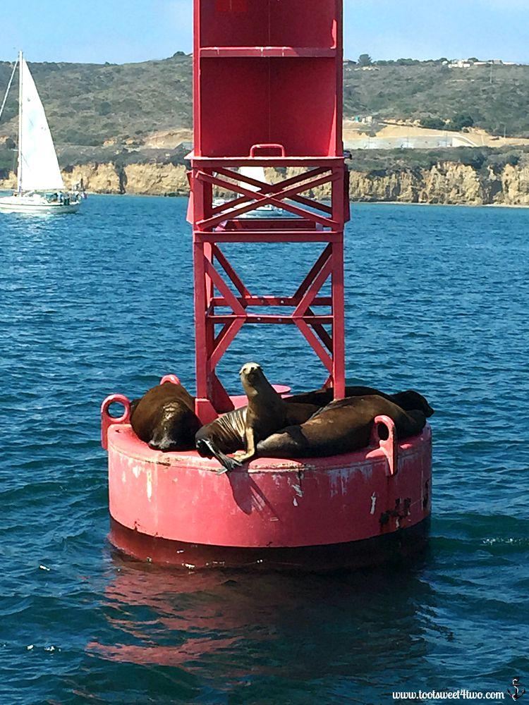 Seals on buoy, San Diego Harbor - Gone Girl