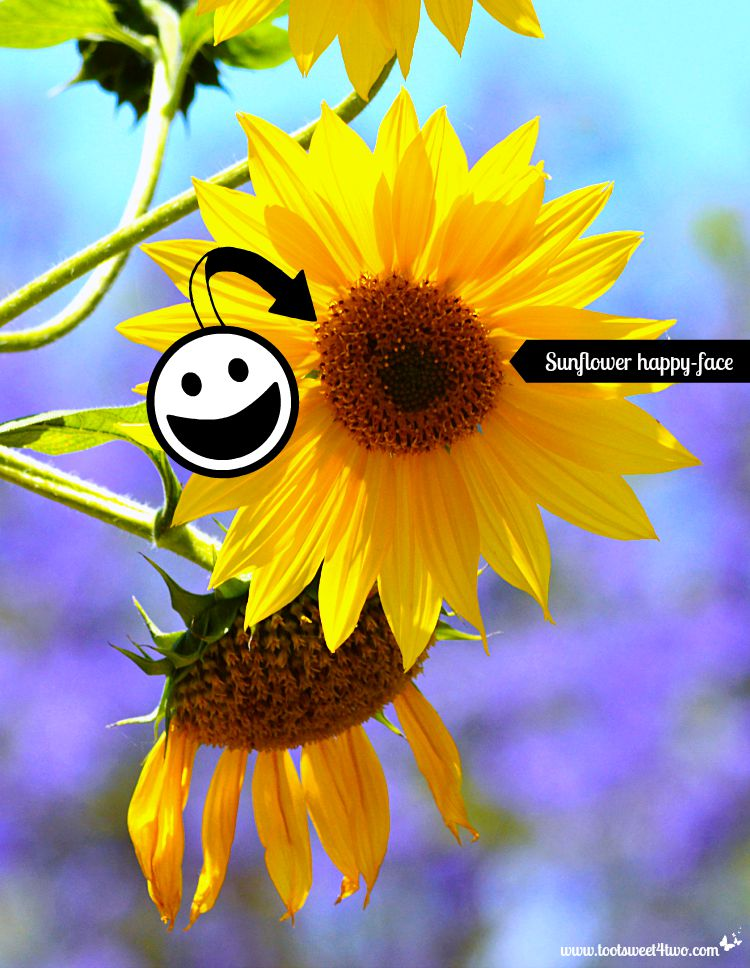 Sunflower happy-face with happy face