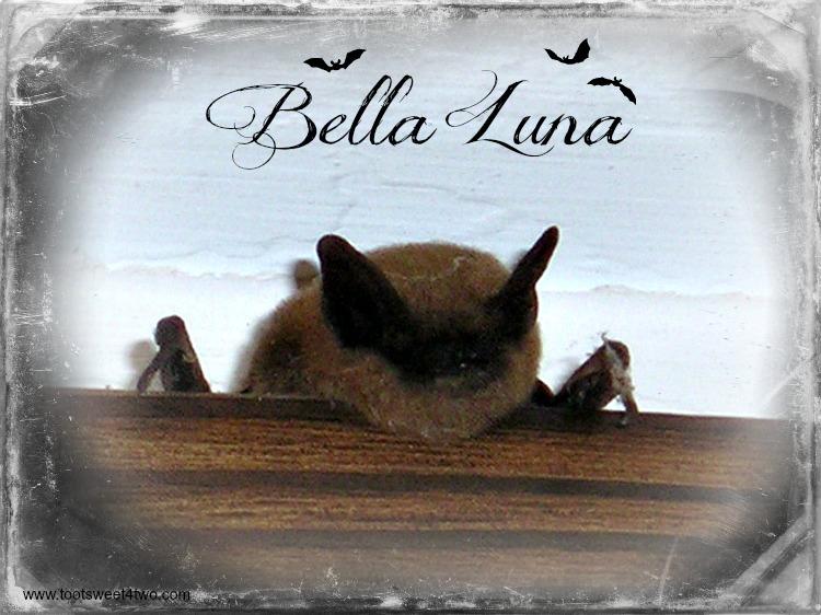 Bella Luna - a picture of a bat