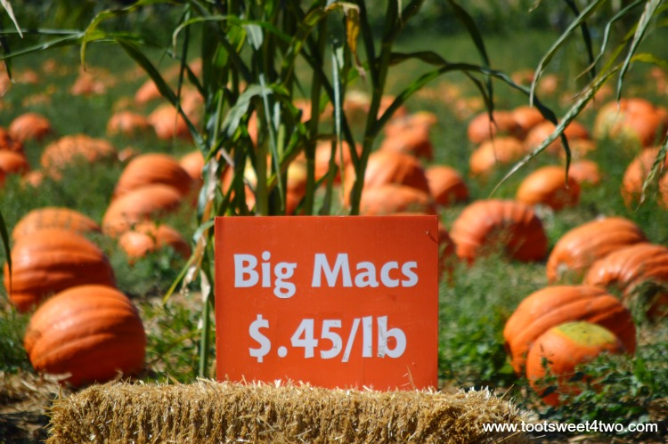 Big Mac Pumpkins and sign