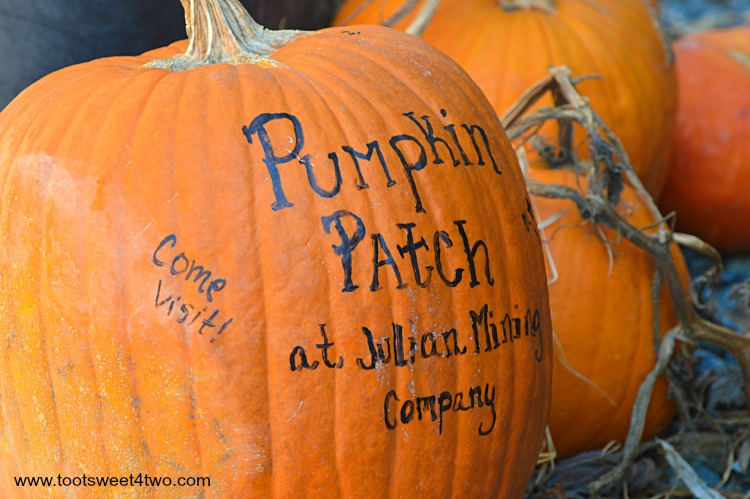 Howden Pumpkin with painted sign for Pumpkin Patch