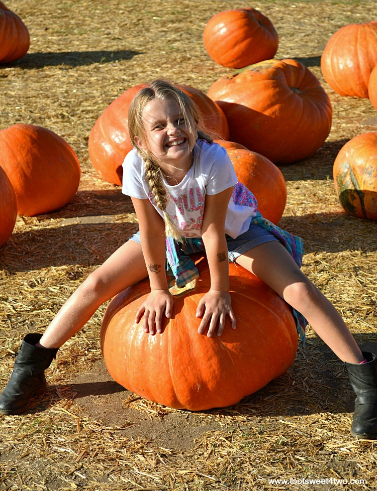 Princess P sitting on a Big Mac pumpkin at Bates Nut Farm