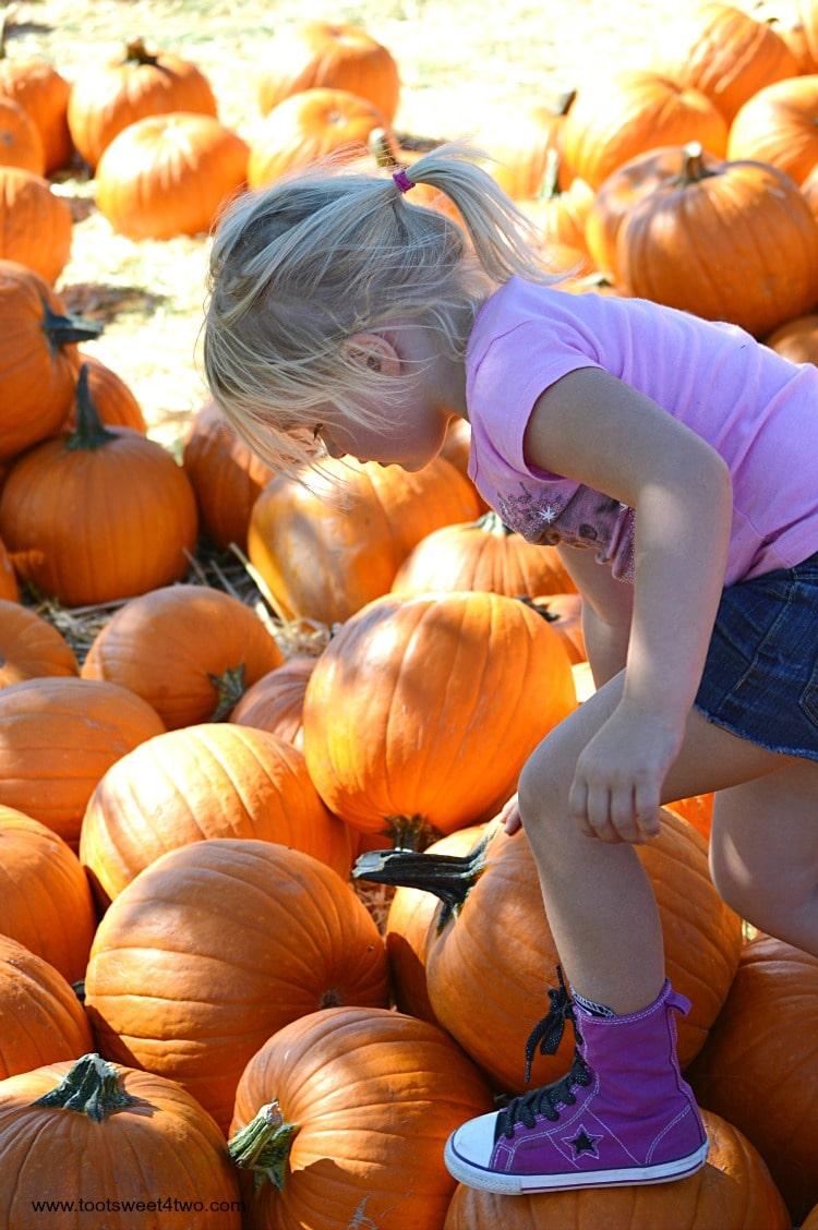 Princess Sweetie Pie choosing a pumpkin