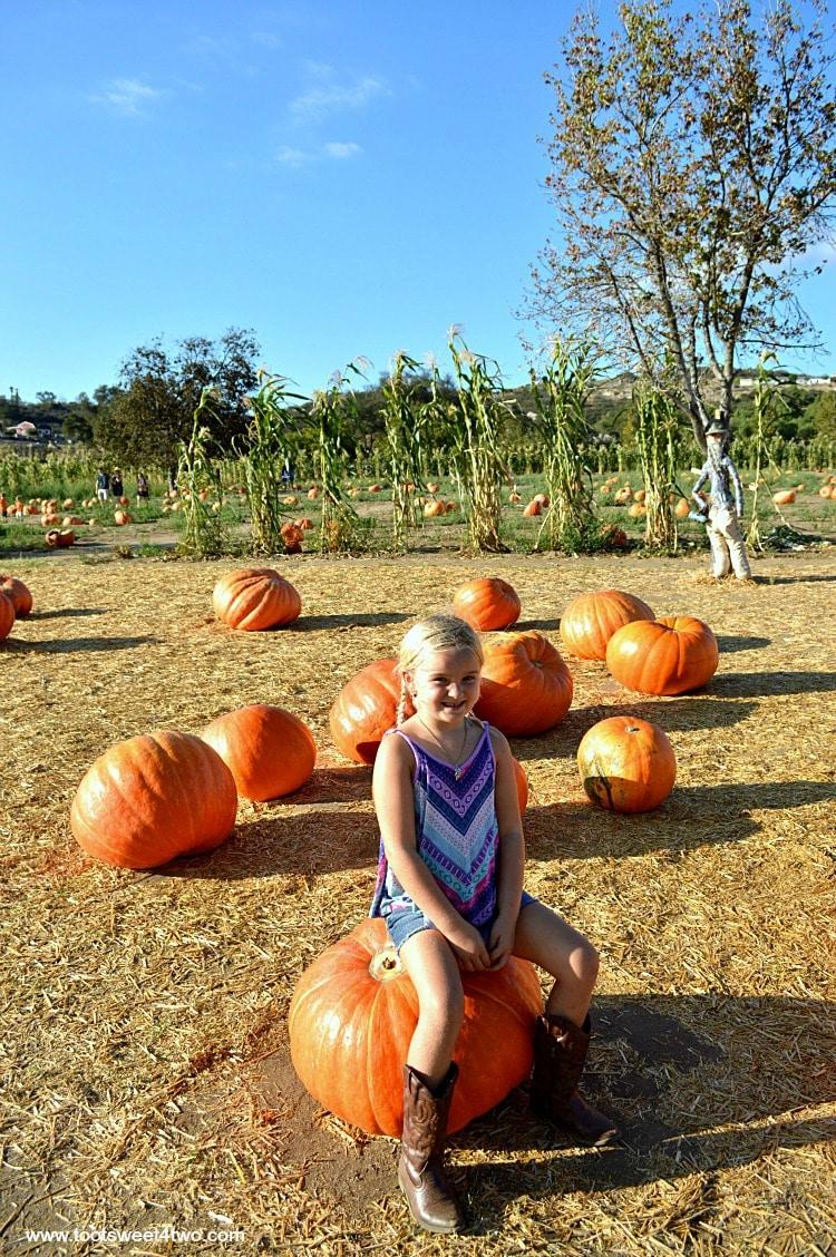 Princess Sweetie Pie sitting on a Big Mac pumpkin 2015
