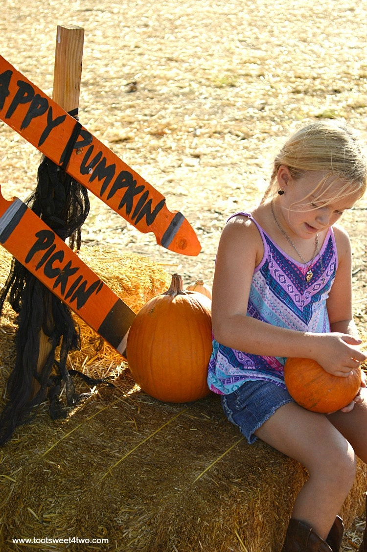 Princess Sweetie Pie sitting with pumpkins on a hay bale 2015