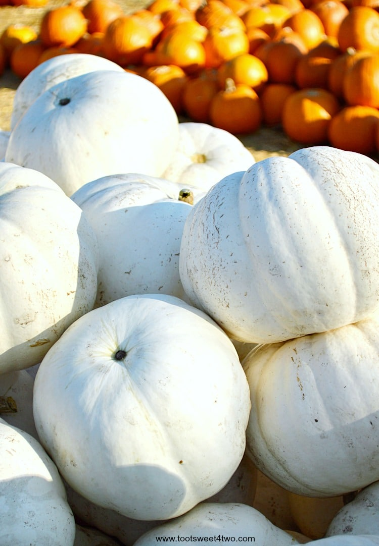 Randomly stacked white pumpkins