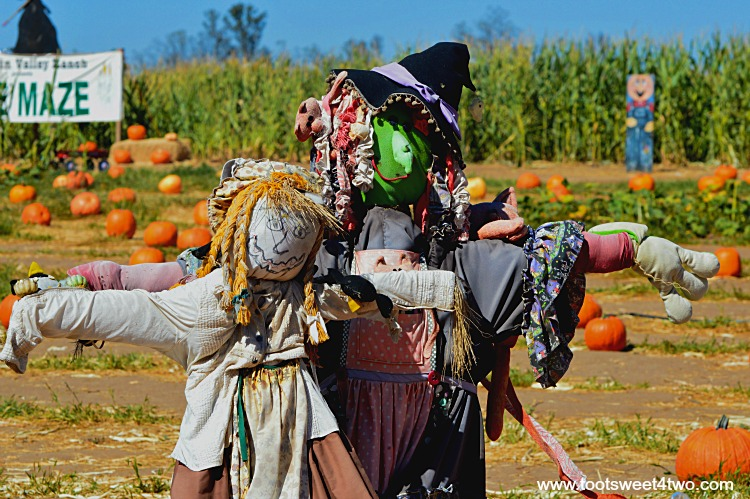 Scarecrows in a field of carving pumpkins