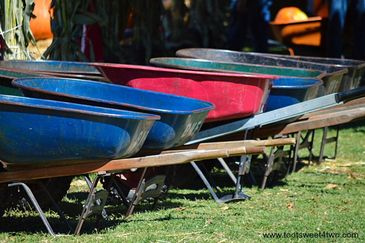 Wheelbarrows at the pumpkin patch horizontal