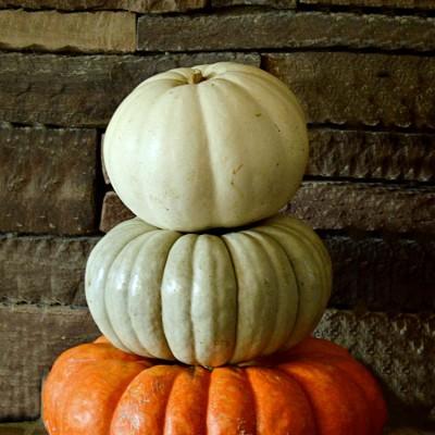 Pumpkin Stacks…and stacks…and stacks…