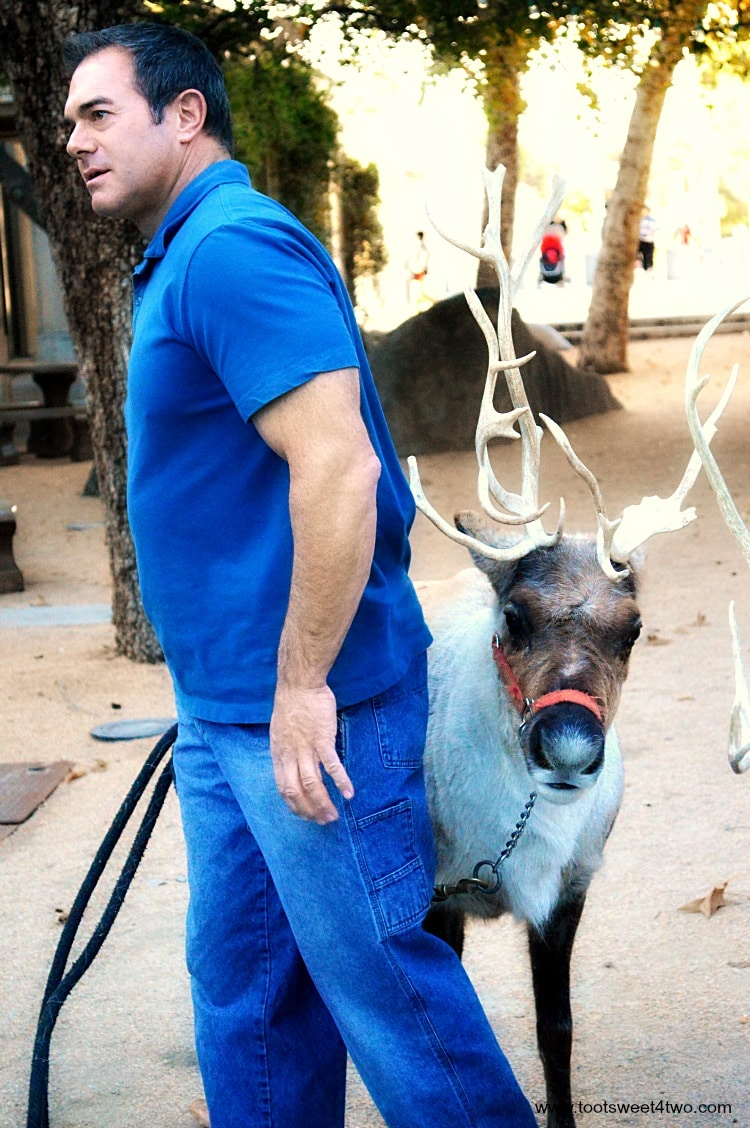 Reindeer and handler at Center for the Arts, Escondido, CA