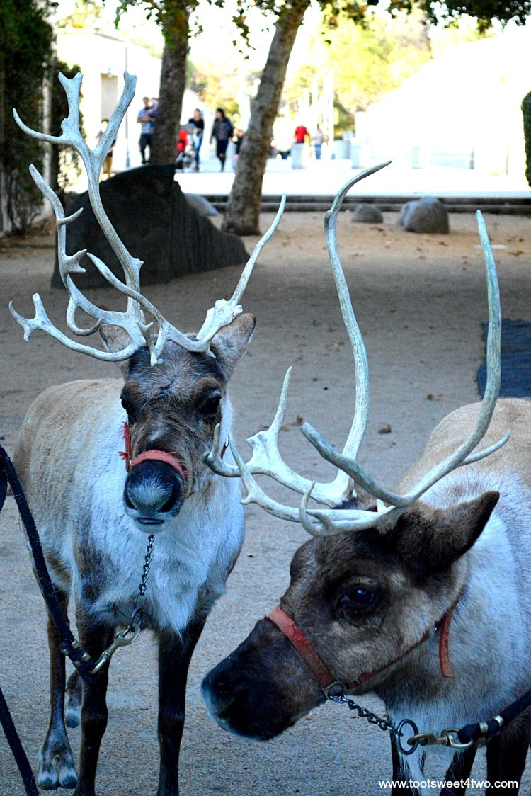 Two Reindeer at Center for the Arts, Escondido, CA