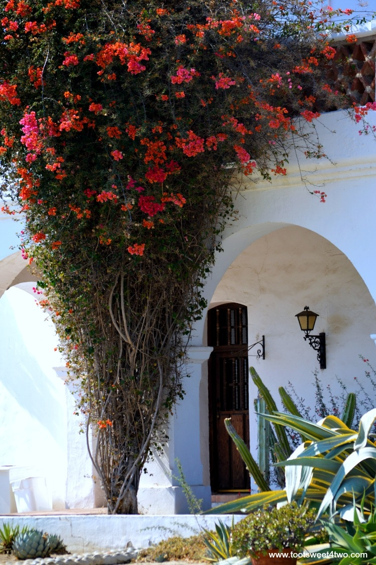 Door and bougainvillea at Mission San Luis Rey