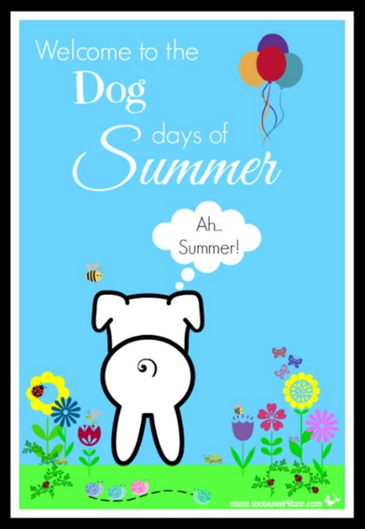 PicMonkey Basics - Design Your Own - Dog Days of Summer