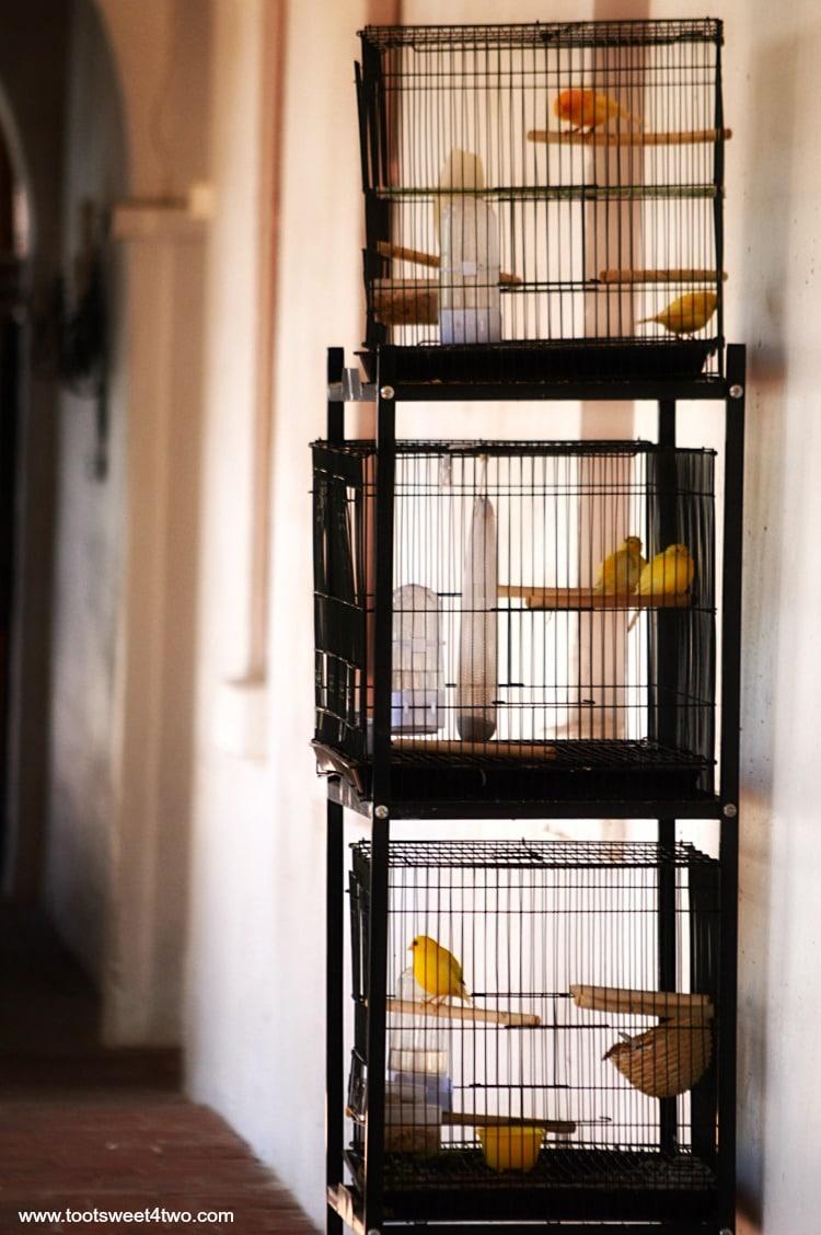 Canaries at Mission San Luis Rey de Francia