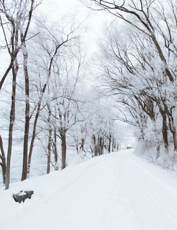 Snow-covered Tree-lined Road